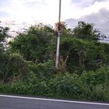 ขายที่ดิน ติดน้ำปิงหน้าถนนหลักท่าลี่ อ.ป่าซาง