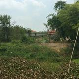 ขายที่ดินเปล่า 279 ตรว ราคาถูก บางใหญ่ นนทบุรี