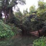 LAND THE FOREST & FARMS VERY NATURAL with Chanote Title correctly and also very near main road