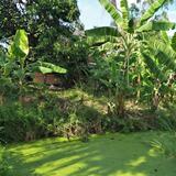 ที่ดินพร้อมบ้านเล็กๆสวนไร่กว่าใกล้แหล่งน้ำและเงียบสงบ ชานเมื