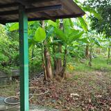 ที่ดินพร้อมบ้านเล็กๆสวนไร่กว่าเหมาะทำบ้านสวนใกล้แหล่งน้ำและเ