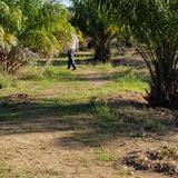 ขายสวนปาล์ม อายุ 5 ปีพร้อมสวนเกษตรผสม 31 ไร่