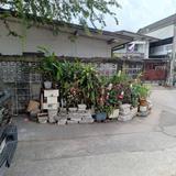 Sale Land for House Sukhumvit 93 BTS Bang Chak