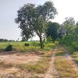 ขาย ที่ดิน คลองสิบสอง ธัญบุรี 2 ไร่ ห่างรังสิต-นครนายกแค่ 700 เมตร เหมาะปลูกบ้าน หรือทำสวนเกษตร
