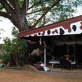 Sale Land with big farm can adaptable will be private house,