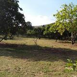 ขายที่ดินพร้อมบ้านและสวนขนาดใหญ่ลำธารล้อมรอบ ร่มรื่นสุดๆๆ ไม