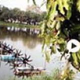 ขายสวนเกษตรผสมมะม่วงและบ่อปลาเลี้ยงกุ้งด้วยขนาดใหญ่ 36 ไร่