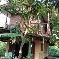 Sale land and small house can adapt will be Home stay  รูปเล็กที่ 5
