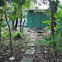 ที่ดินสวนป่าธรรมชาติติดลำคลอง ร่มรื่น บรรยากาศชานเมือง โฉนด  รูปเล็กที่ 1