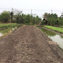 ขายที่ดินเปล่า 279 ตรว ราคาถูก บางใหญ่ นนทบุรี  รูปเล็กที่ 5