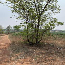 ขายที่ดินเปล่า จังหวัดอุดรธานี อยู่บนถนนมิตรภาพ เนื้อที่ 52 ไร่ 40 ตารางวา รูปเล็กที่ 3
