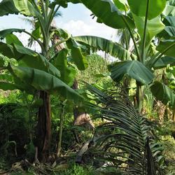 ที่ดินพร้อมบ้านเล็กๆสวนไร่กว่าใกล้แหล่งน้ำและเงียบสงบ ชานเมื รูปเล็กที่ 2