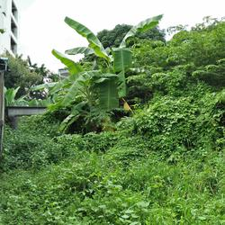 Rent   Smaller  land long term suitable for  project Phrakha รูปเล็กที่ 4