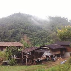 ขายบ้านโฮมสเตย์ ขนาดเล็กๆ สวยมากๆ ดอยสูง ป่าลึกบนดอย เชียงใหม่  อ.กัลยาณิวัฒนา ไปได้เส้นปาย-เส้นสะเมิง รูปเล็กที่ 5