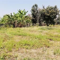 SRP02ขายที่ดินเปล่ามีเนื้อที่0-3-70.2ไร่ติดทางสาธารณประโยชน์ รูปเล็กที่ 3