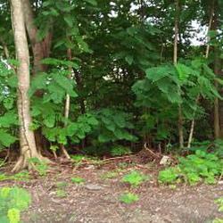 ขายที่ดิน1-2 ไร่ ภายในโครงการ รอยัล กอล์ฟ คันทรี คลับ อ่อนนุ รูปเล็กที่ 4
