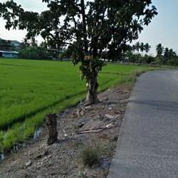 Sale land and small house can adapt will be Home stay  รูปเล็กที่ 6