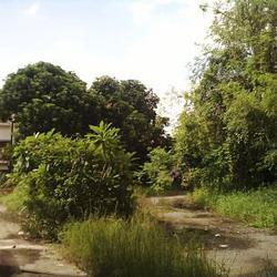 ขายที่ดินไร่กว่า อ่อนนุช/ Sale Land with old  house On-Nut R รูปเล็กที่ 4