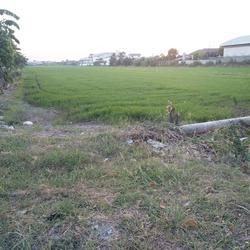 ขายที่ดินไทรน้อย 12 ไร่ เขตบางบัวทอง นนทบุรี ติดถนนบ้านกล้วย-ไทรน้อย เส้น 1013 อยู่ในเขตพื้นที่สีเหลือง เห รูปเล็กที่ 6