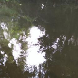 ที่ดินพร้อมสวนขนาดใหญ่ ติดห้วยลำธาร แหล่งธรรมชาติ น่าอยู่มาก รูปเล็กที่ 6