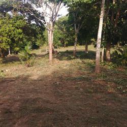 ขายที่ดินและให้เช่าที่ดินบริเวณเนินเขาเตี้ย ต้นไม้ใหญ่ ร่มรื่น ที่สวยสุดๆๆ ซื้อแล้วไม่ผิดหวัง โฉนดล้านเปอร์เซนต์