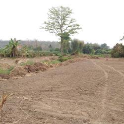 ขายที่ดิน สำหรับที่อยู่อาศัย และทำการเกษตร รูปเล็กที่ 1