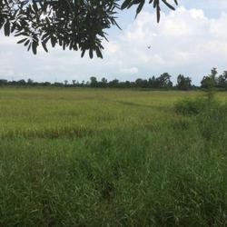 ขายที่ดิน อำเภอพนัสนิคม จังหวัดชลบุรี ติดถนนเมืองเก่า รูปเล็กที่ 5