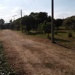 ที่ดินพร้อมสวนขนาดใหญ่ ติดห้วยลำธาร แหล่งธรรมชาติ น่าอยู่มาก รูปเล็กที่ 4