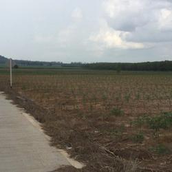 ขายที่ดิน อำเภอบ่อทอง จังหวัดชลบุรี ติดถนนสาย 3340 รูปเล็กที่ 5