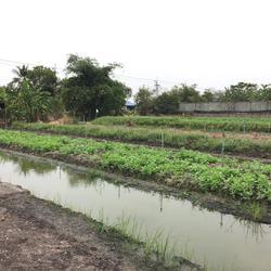 ขายที่ดินเปล่า 279 ตรว ราคาถูก บางใหญ่ นนทบุรี  รูปเล็กที่ 4