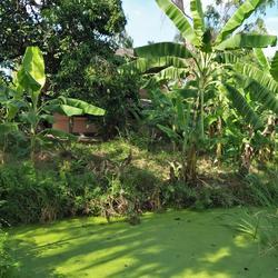 ที่ดินพร้อมบ้านเล็กๆสวนไร่กว่าใกล้แหล่งน้ำและเงียบสงบ ชานเมื รูปเล็กที่ 1