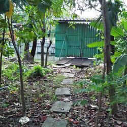 ที่ดินพร้อมบ้านเล็กๆสวนไร่กว่าเหมาะทำบ้านสวนใกล้คลอง ถนน ไร่ รูปเล็กที่ 3