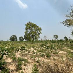 ขายที่ดินเปล่า บ้านโนนรัง จังหวัดขอนแก่น เนื้อที่ 29 ไร่ 3 งาน 30 ตารางวา รูปเล็กที่ 3
