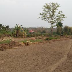 ขายที่ดิน สำหรับที่อยู่อาศัย และทำการเกษตร รูปเล็กที่ 6