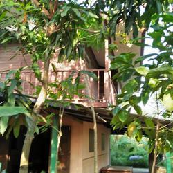 ขายสวนไร่พร้อมบ้านไม้เก่าติดลำคลอง ร่มรื่น ใกล้ถนนพุทธมณฑลสา รูปเล็กที่ 3