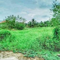 ขาย  ที่ดิน ที่ดินแบ่งล็อก ขายถูก ที่ดินเปล่า แบ่งล็อกขาย 54ตรว  ลดสุด ๆ ราคานี้ ถึงสิ้นเดือน มีนาคม 2564 เท่านั้น รูปเล็กที่ 1