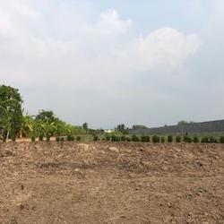 ขาย  ที่ดิน ที่สวยทำเลดี ที่ดินแบ่งขาย 100ตรว  ที่ดินสวยที่คุณสามารถเป็นเจ้าของได้ รูปเล็กที่ 5