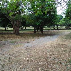 ที่ดินพร้อมสวนขนาดใหญ่ ติดห้วยลำธาร แหล่งธรรมชาติ น่าอยู่มาก รูปเล็กที่ 1