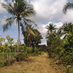 Sale Land 2 Rais close beach just 150 m.suitable for retirement very peacefully greenery รูปเล็กที่ 2