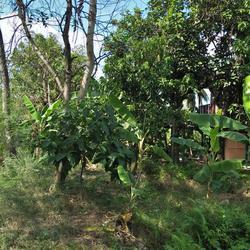 ขายที่ดินสวนไร่กว่า พุทธมณฑลสาย 5  บ้านสวนเหมาะทำเป็นโฮมสเตย รูปเล็กที่ 2