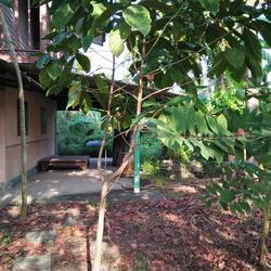 ที่ดินพร้อมบ้านเล็กๆสวนไร่กว่าเหมาะทำบ้านสวนใกล้คลอง ถนน ไร่ รูปเล็กที่ 1