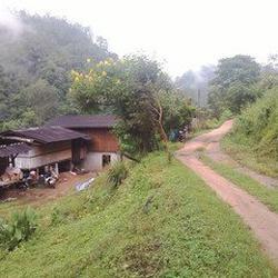 ขายบ้านโฮมสเตย์ ขนาดเล็กๆ สวยมากๆ ดอยสูง ป่าลึกบนดอย เชียงใหม่  อ.กัลยาณิวัฒนา ไปได้เส้นปาย-เส้นสะเมิง รูปเล็กที่ 3