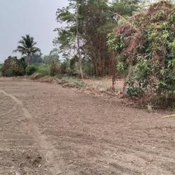 ขายที่ดิน สำหรับที่อยู่อาศัย และทำการเกษตร รูปเล็กที่ 3