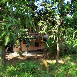 ขายที่ดินสวนไร่กว่า พุทธมณฑลสาย 5  บ้านสวนเหมาะทำเป็นโฮมสเตย รูปเล็กที่ 4
