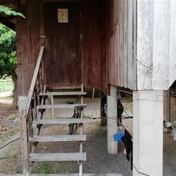 SS163ขายบ้านเก่าในที่ดิน63ตรว.ติดทางสาธารณประโยชน์ถึงสองด้าน รูปเล็กที่ 2