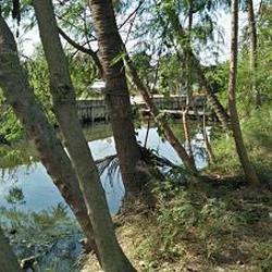 ที่ดินสวนป่าธรรมชาติติดลำคลอง ร่มรื่น บรรยากาศชานเมือง โฉนด  รูปเล็กที่ 5