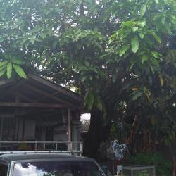 ขายบ้าน เนื้อที่ดิน 80 วา ย่าน หนามแดง-สำโรง ถนนเทพา รูปเล็กที่ 4