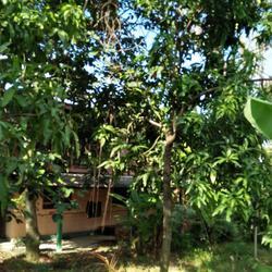 ที่ดินพร้อมบ้านเล็กๆสวนไร่กว่าเหมาะทำบ้านสวนใกล้คลอง ถนน ไร่ รูปเล็กที่ 2