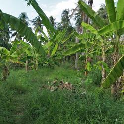 ที่ดินพร้อมบ้านเล็กๆสวนไร่กว่าใกล้แหล่งน้ำและเงียบสงบ ชานเมื รูปเล็กที่ 3