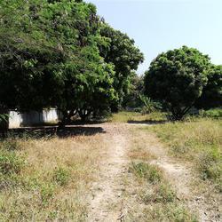 SRP01ขายที่สวน2-2-05.7ไร่ติดทางสาธารณประโยชน์ที่เชื่อมกับถนน รูปเล็กที่ 6
